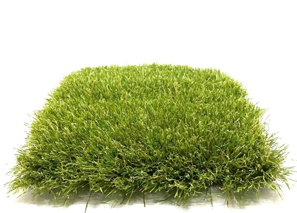 summer-fresh-newgrass