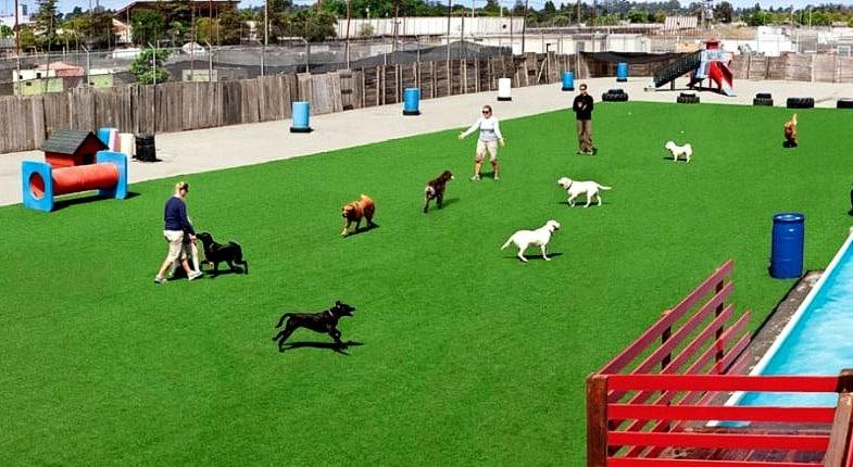 newgrass-pet-play-area-outdoor-dog-run